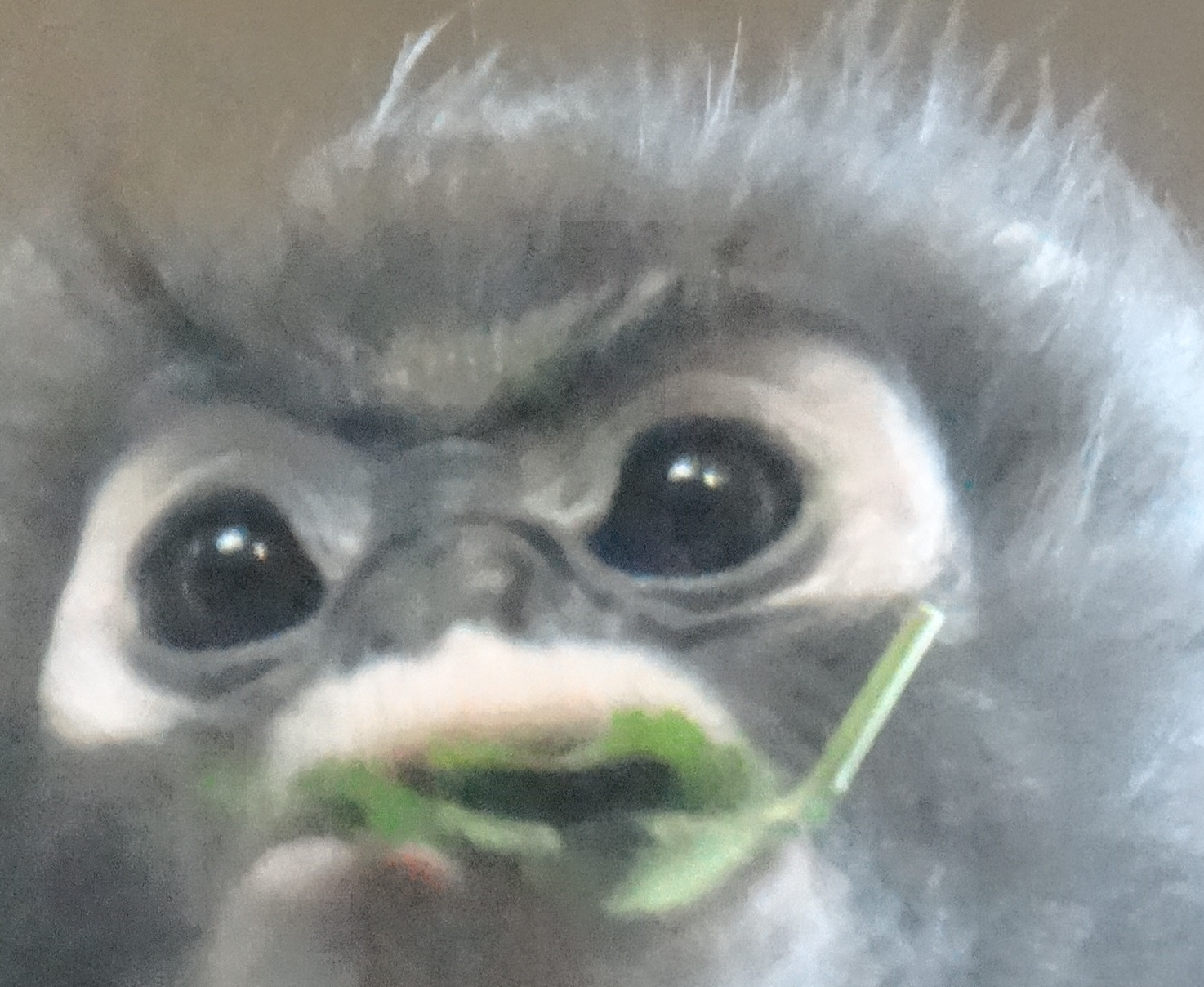 grainy monkey image
