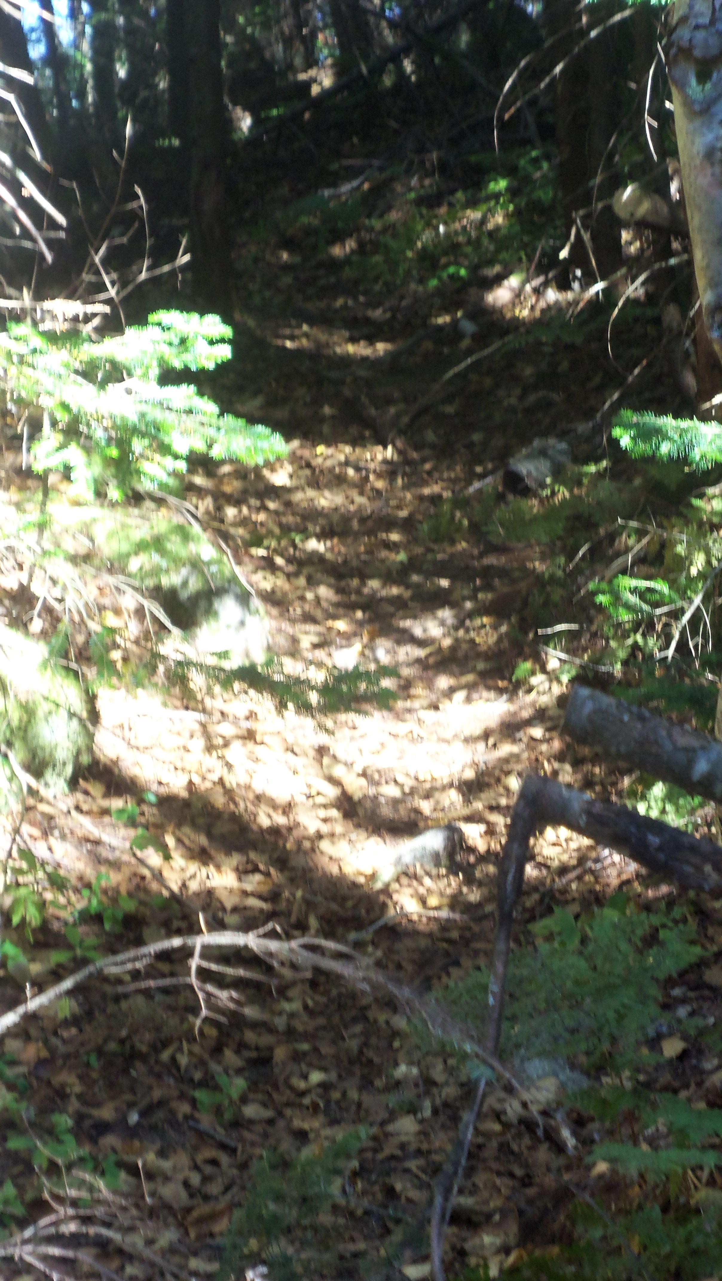 herd path to East Dix slide