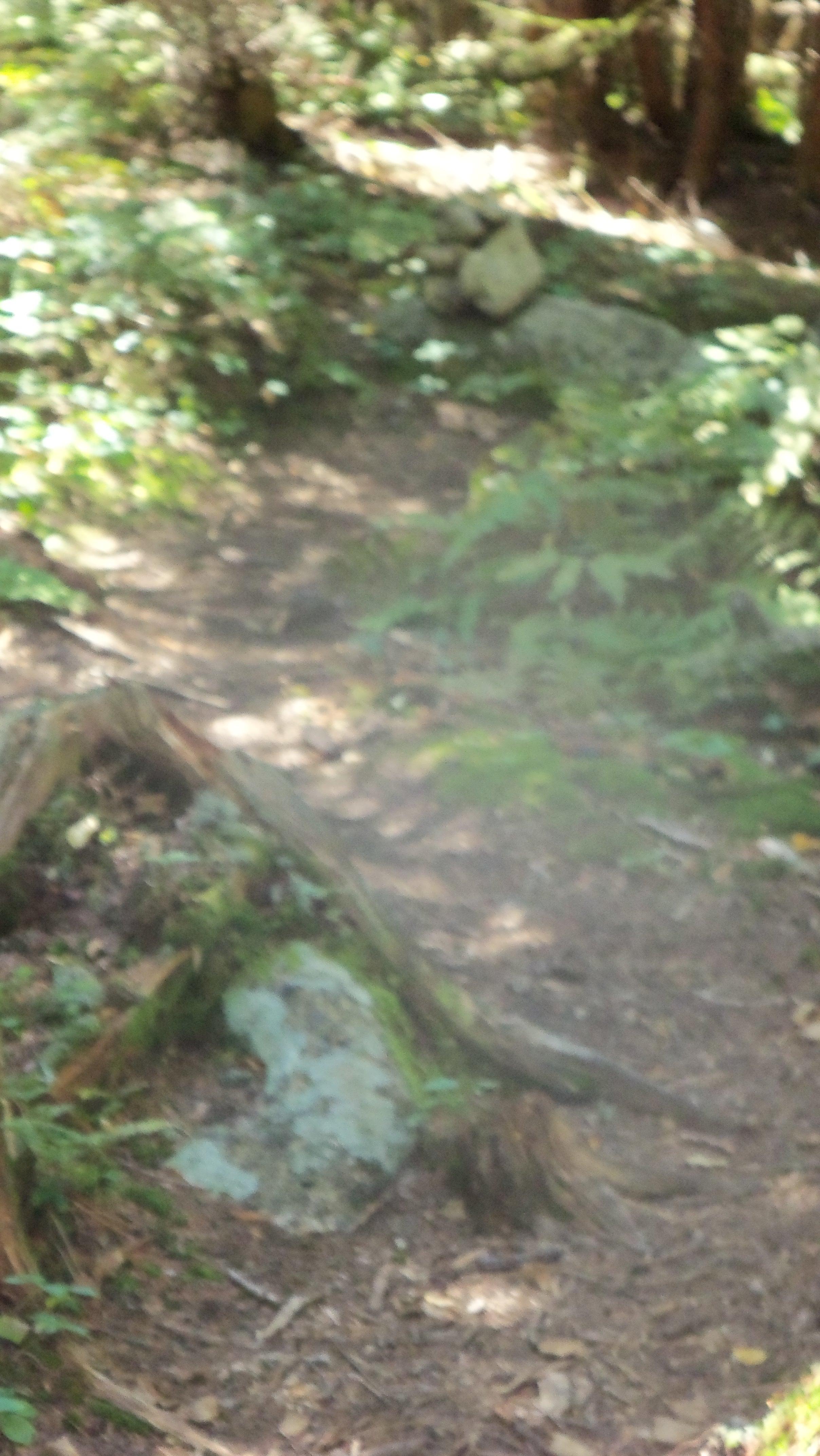 cairn marking Lillian Brook herd path